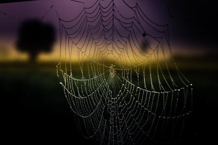 蜘蛛网,滴,云,宏