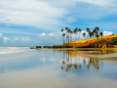 天空,海洋,反思,岸,棕榈树,巴西