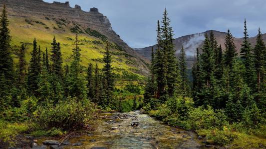 美国,公园,山,云杉,克里克,灌木,冰川国家公园,性质