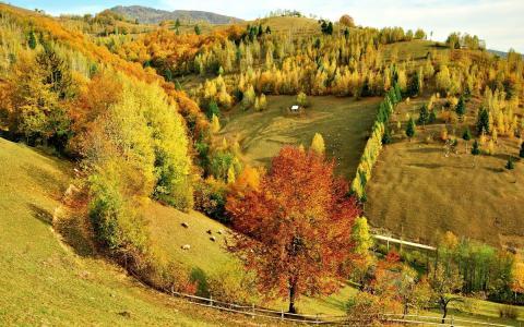 森林,景观,秋天,树木