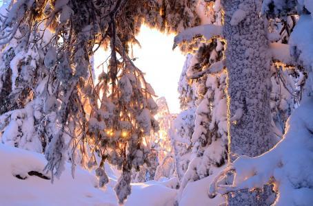 性质,冬天,雪,树,树干,分支机构,太阳