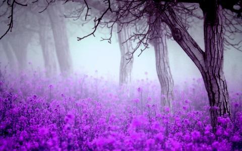 春天,早晨,雾,花,树,紫罗兰