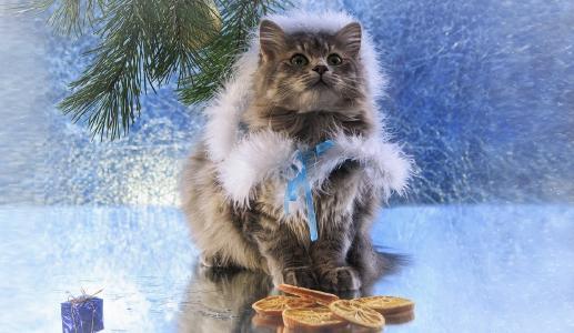 雪少女,猫,pelerinka,松枝,玩具,烘烤,新年贺卡,伊琳娜Prikhodko