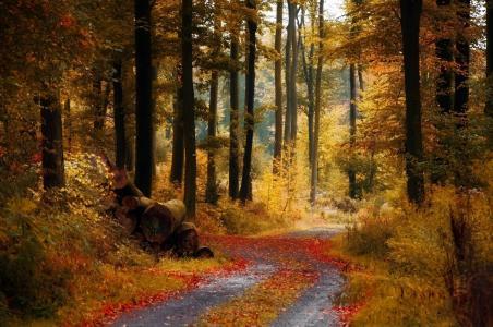 秋天,森林,道路