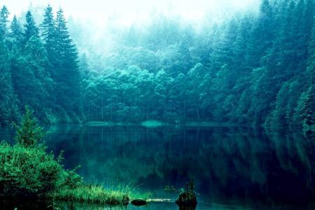 湖,森林,美丽,白霜
