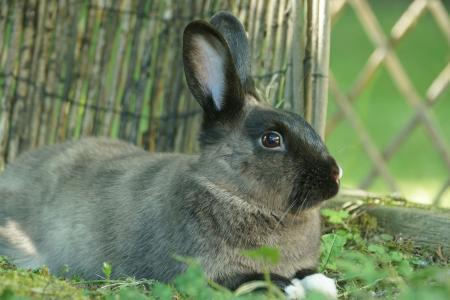 兔子,耳朵,搞笑,草