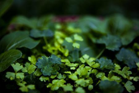 雨后清新小小芽儿草