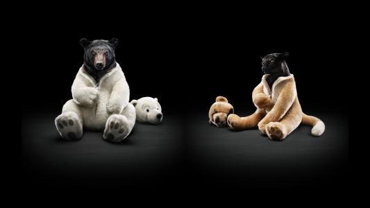 豹,熊,伪装