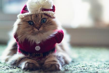 查看,C本杰明torode,心情,猫