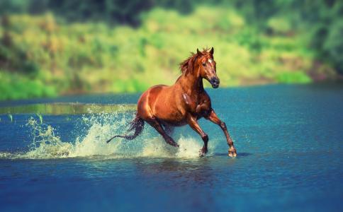 马,自然,夏天,美丽