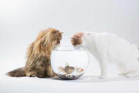 水族馆,黛西,猫,本杰明torode,本torode,汉娜,鱼类