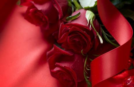 玫瑰,猩红色,红色,丝带