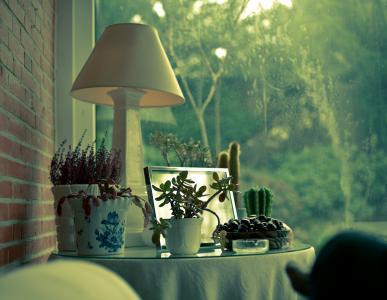 房子,植物,窗口,,灯,仙人掌