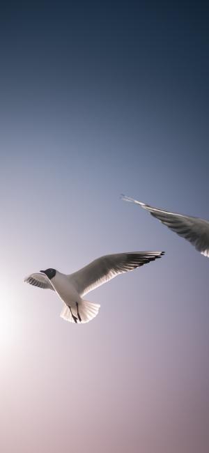 唯美的海鸥特写