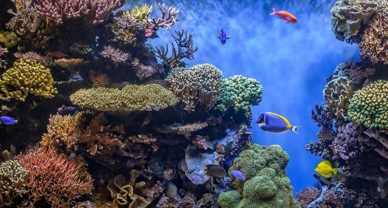 海床,珊瑚,鱼