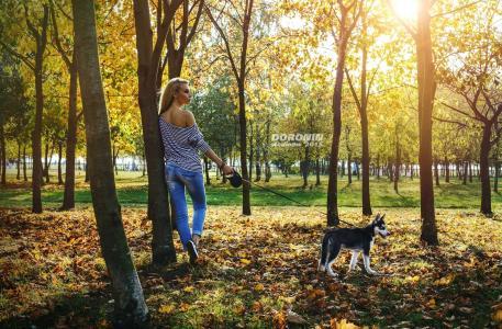 女孩,金发女郎,构成,后视图,衣服,雕像,摄影师,丹尼斯doronin,公园,树,树叶,小狗,哈士奇