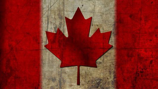 加拿大,枫叶,国旗,国旗,加拿大