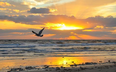 日落,海鸥,太阳,海滩,沙,水,天空