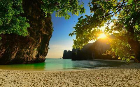 沙滩,水,海,树,沙子