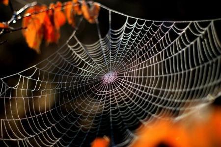 蜘蛛网,宏