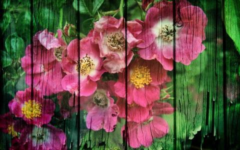 鲜花,油漆,篱笆