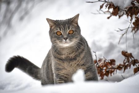 动物,猫,猫,看,冬天,雪,分支机构