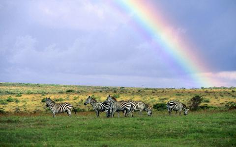 斑马,彩虹,寿衣