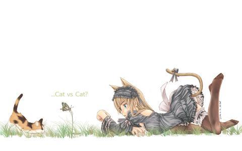 猫,女孩,小猫,心情,蝴蝶,反对猫,白色背景的猫