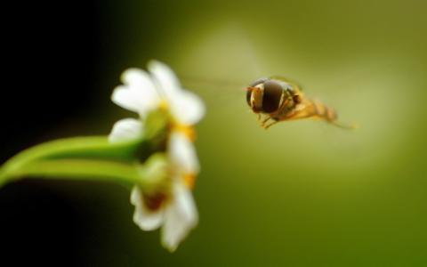 二,一朵花,一只苍蝇,在飞行中