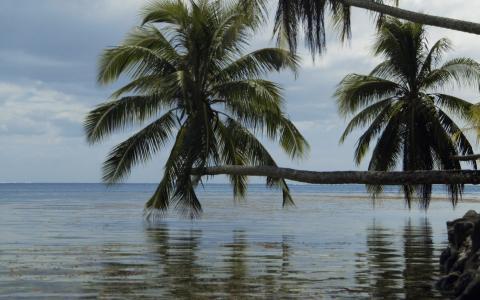 海洋,棕榈树,蓝色,云彩