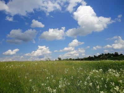 夏天,天空,云,草,鲜花