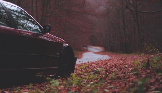 宝马,路,秋,森林,山,美丽