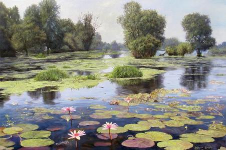 图片,Zbigniew Kopania,景观,湖,反射,池塘,鲜花,莲花,树,浮萍,水,花