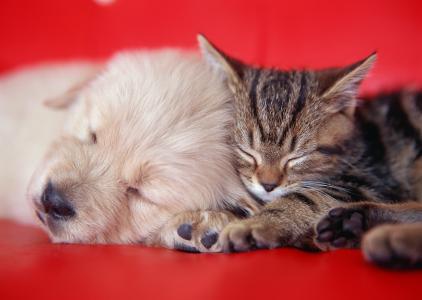 沙发,小狗,小猫