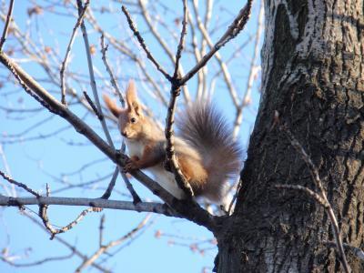 松鼠,松鼠,树,天空,春天