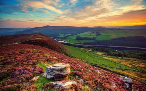 丘陵,田野,颜色,树木,草,天空