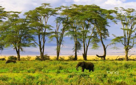 野生动物园,大象