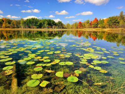 自然,秋天,树木,景观,河,睡莲