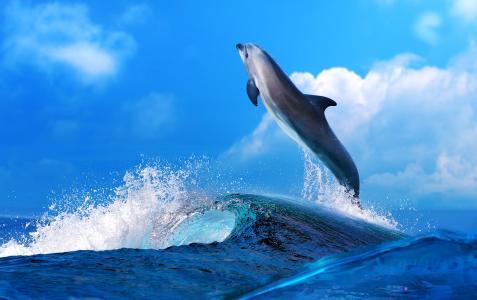 海,海豚,波浪,云彩