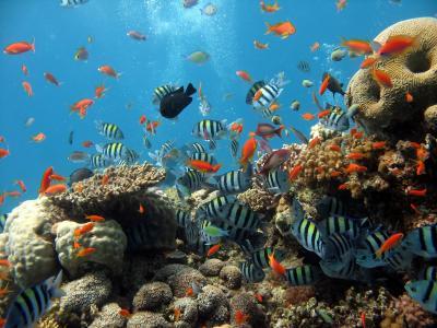 鱼,海洋,海,海底世界,珊瑚,水族馆