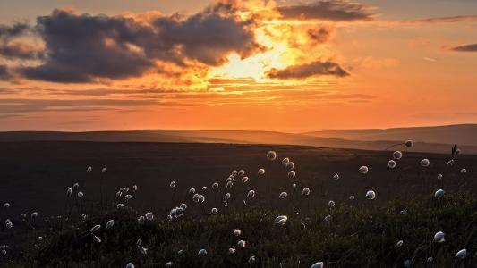 日落,谷,晚上,棉花