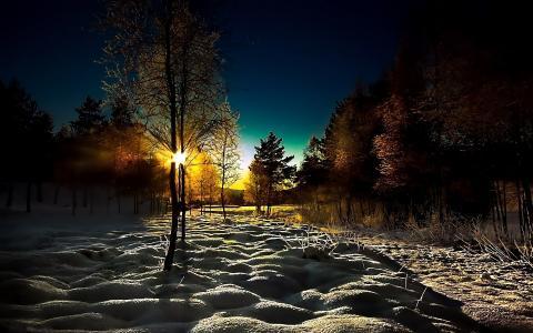 冬天,木头,树,雪