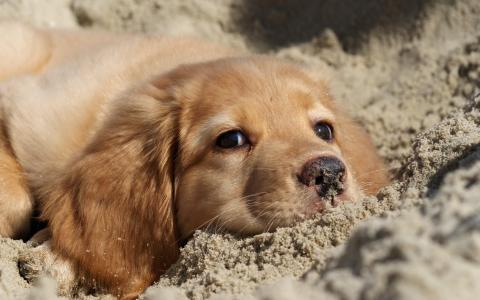 自然,沙,狗