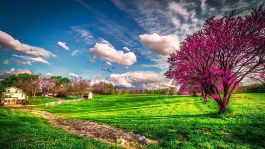 自然,天空,云,房子,树,田地,开花,春天