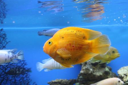 鱼,水族馆,鹦鹉