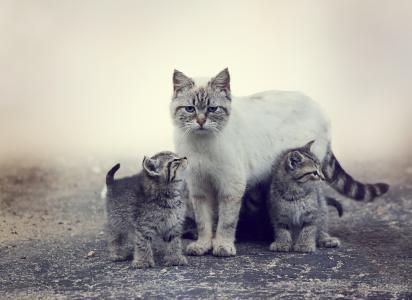 猫,小猫,性质,掠食者