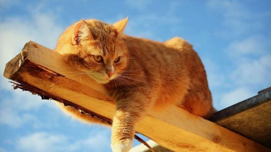 猫,红发,枪口,小胡子,耳朵,眼睛,地带,树,美丽,搞笑,乐趣