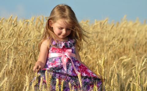 小麦,小穗,女孩,礼服,夏天