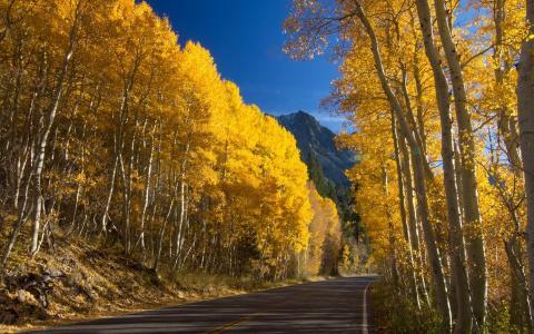路,树,黄色,山,叶子