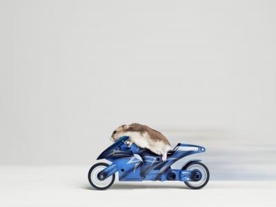 仓鼠,摩托车赛车手,搞笑,箭头